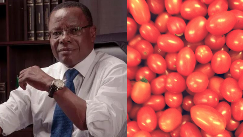 Maurice Kamto - La filière Tomate au Cameroun